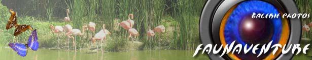 voyages photographiques faune